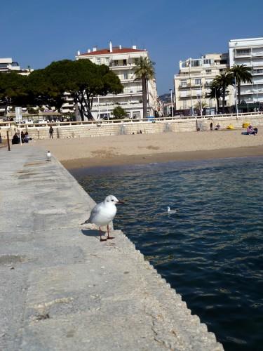 Mon ami à Cannes